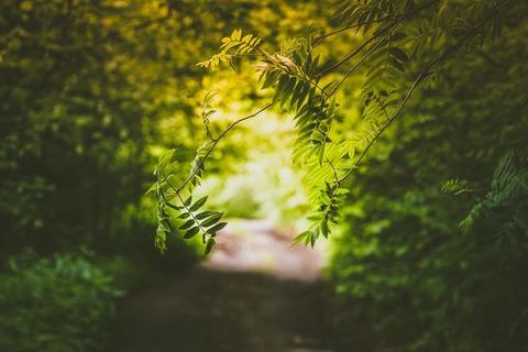 登山道と緑
