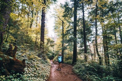 林道を歩くハイカー