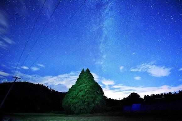 トトロの木 (1)