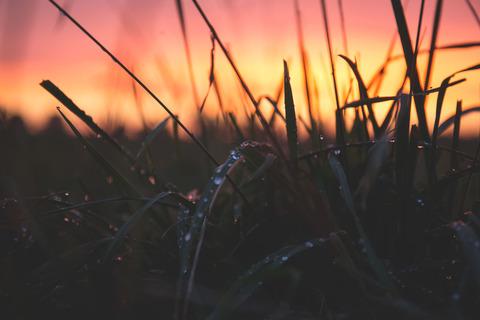 夜露を浴びた草