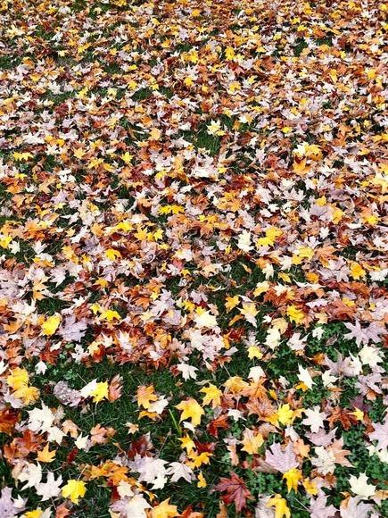 【長崎】「なぜ落ち葉は裏向きが多いのか」文科大臣賞