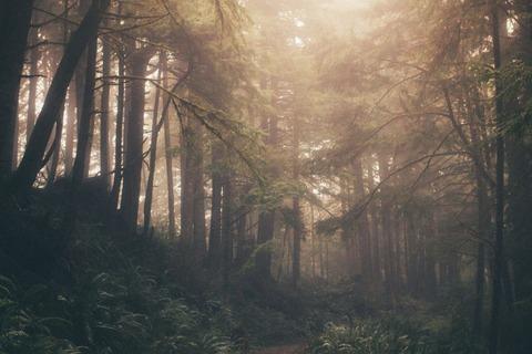 光が差し込む森の中
