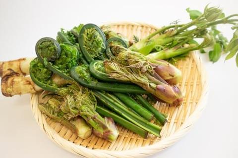 山菜 (1)