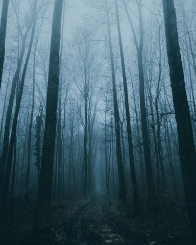 霧が出た林道