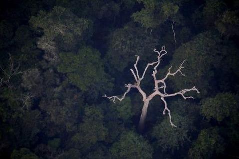アマゾンの航空写真