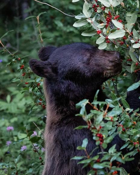 【北海道】旭川市の市街地でクマと乗用車が衝突 乗用車はバンパーなどが壊れクマは逃げる