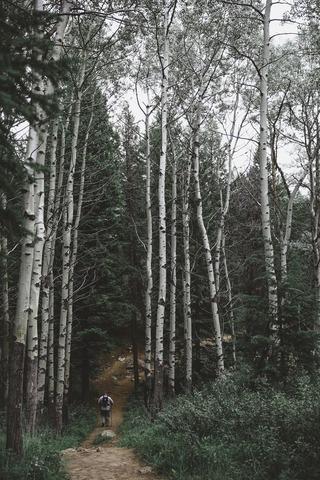 樹林帯を歩くハイカー