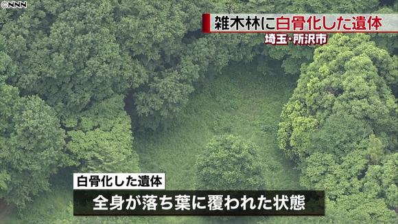 トトロの森 (1)