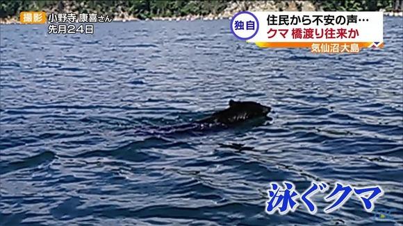 【宮城・気仙沼大島】クマが橋を渡って往来か? 泳ぐクマ続報 住民から不安の声