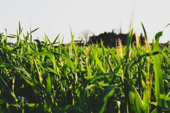 草むら (1)