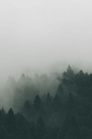 霧がかる森