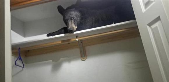クローゼットで寝るクマ