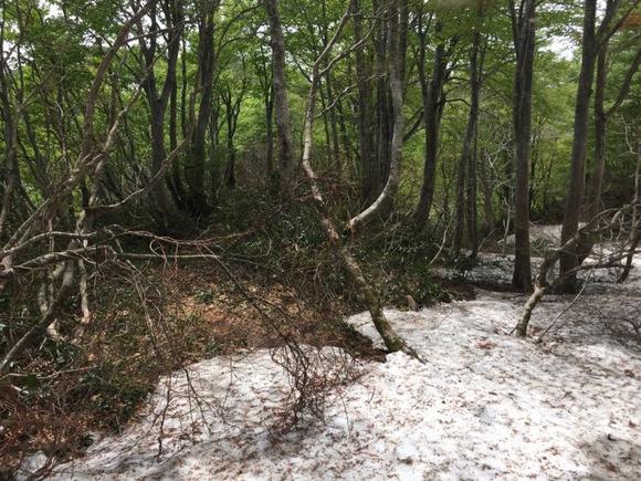 雪の混じる登山道