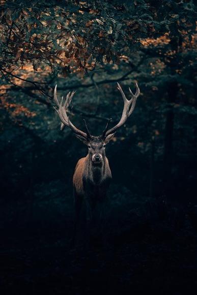 【動物】 シカの歴戦個体が発見される