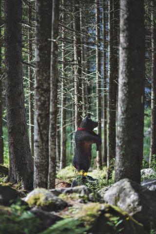 立ち上がる熊