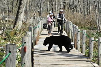 戸隠森林植物園に現れた熊