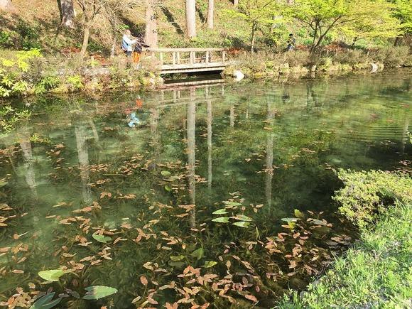 通称モネの池全景1