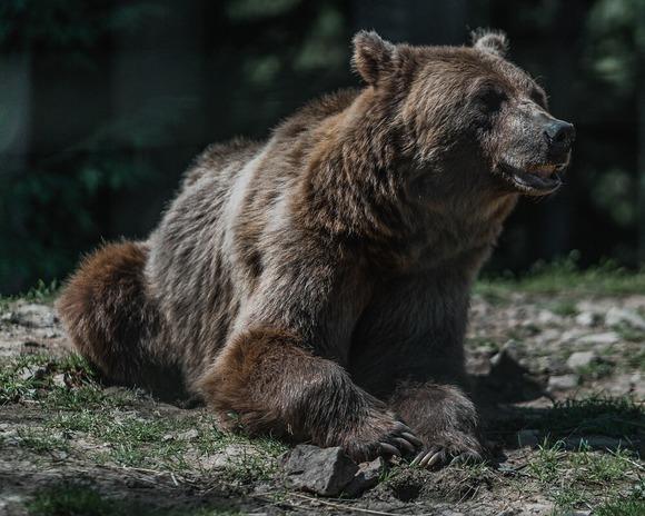 ニキータ君(11)、動物園でクマに襲われ死亡 一緒に来た女子2人に「勇敢なとこを見せる」と檻に入る