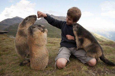 マーモットに餌を上げる少年