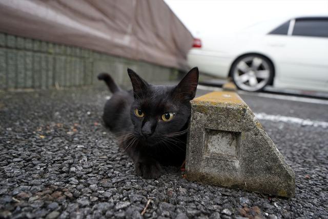 しゃがむ黒猫