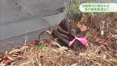 斬られた街路樹