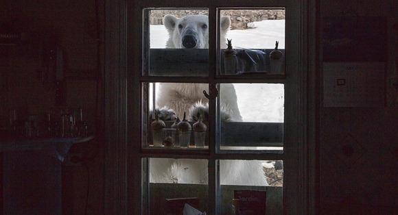 窓から中をのぞくシロクマ