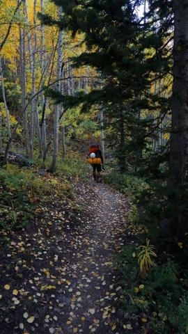 樹林帯を歩く登山者