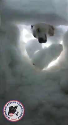 雪から顔を出す犬