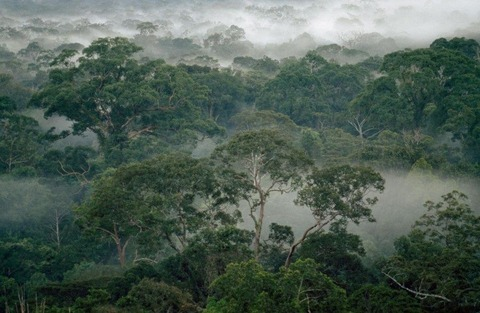グヌンパルン国立公園
