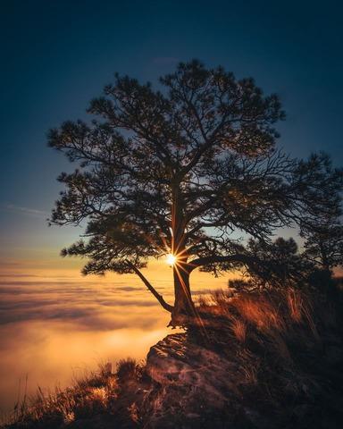 山の雲海と朝陽
