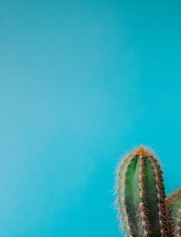 青空とサボテン