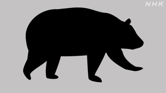クマのシルエット (1)