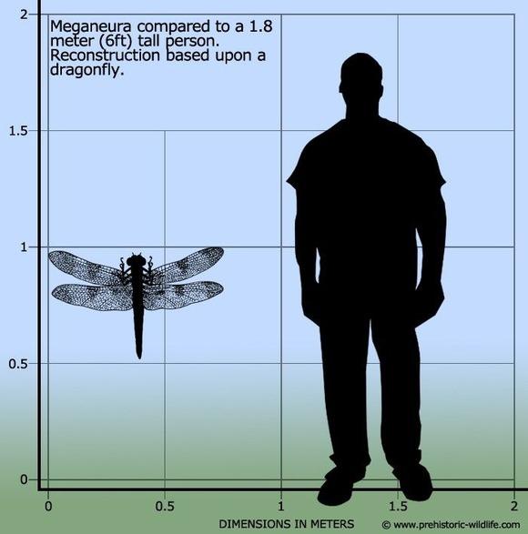 メガネウラの大きさ