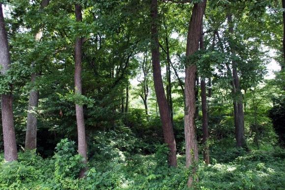 100万ぐらいで山林買ってmyキャンプ場作りたいんやが