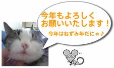 【田中】サーコ