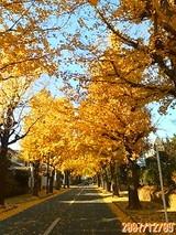 【山田】プチ紅葉