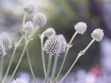 テラスの花