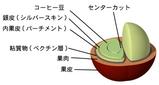 コーヒーの実と種子