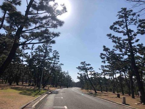 明治6年開園 堺市西区にある大阪で最も古い公園『浜寺公園』