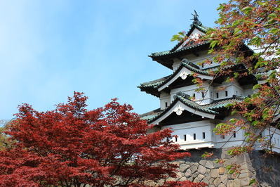 弘前城とさくら