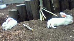 上野動物園と根津神社