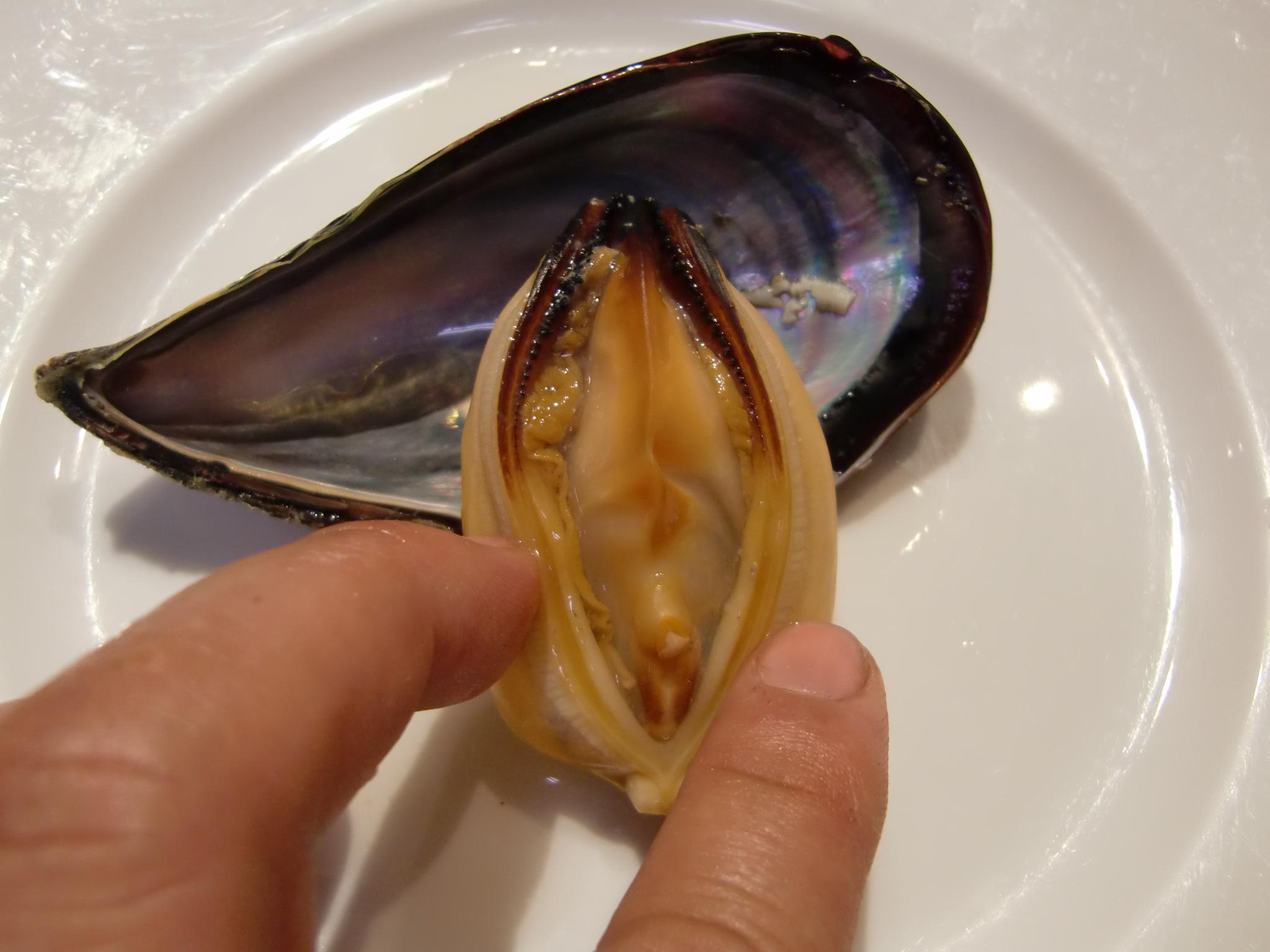 大分産せとがい(いがい) : Pappaのお魚ブログ!