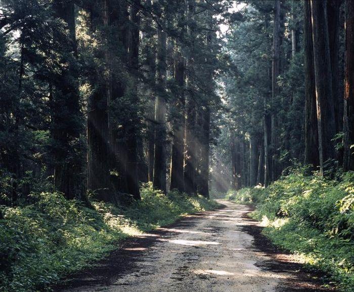 日光杉並木街道