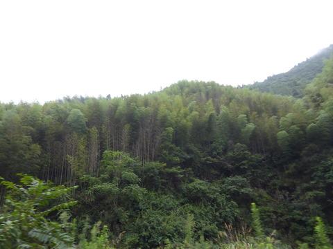 宏村へ行く途中3
