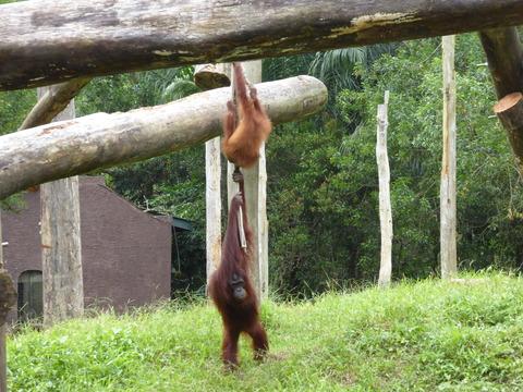 ②Lok Kawi Wild Life Park41