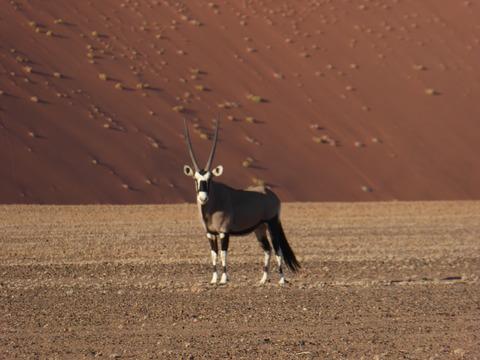 ナミブ砂漠 9