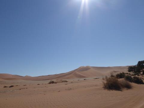 ナミブ砂漠 25