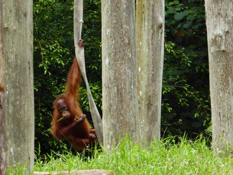 ②Lok Kawi Wild Life Park27