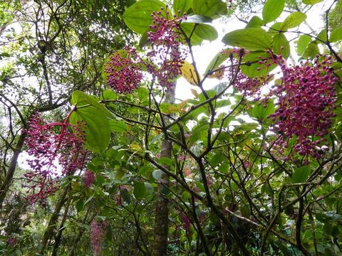 キナバル公園9