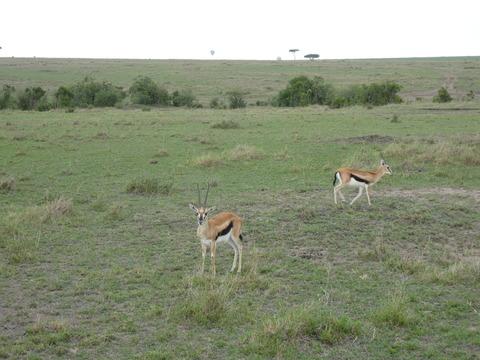 マサイマラ国立保護区 (104)